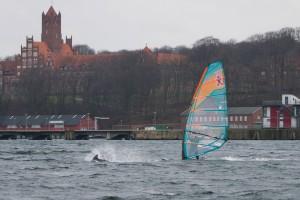 Valentin Böckler and the dolphins - Pic: Phil Schreyer
